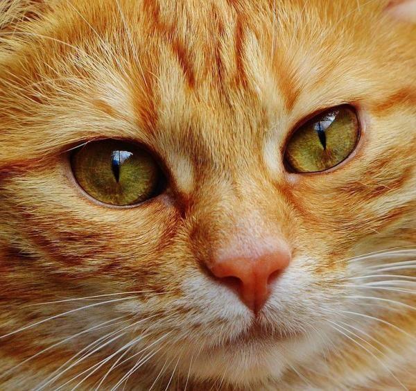 10 cose che non sapevi sui gatti