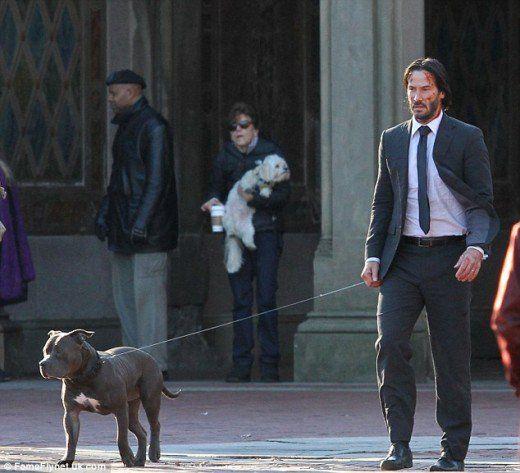 Keanu Reeves e il suo amico John Wick, pitbull blu di nome Buster