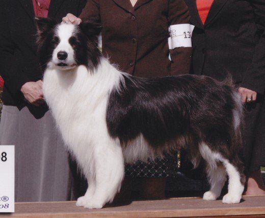 50 Nomi per cani con piedi bianchi