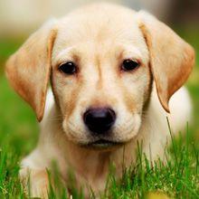 7 modi per eliminare naturalmente le pulci sui cani