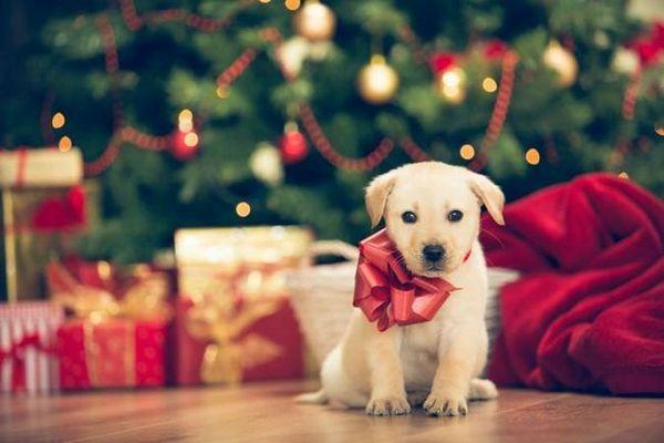 Un cucciolo a Natale