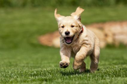 Consigli su microchip per cani