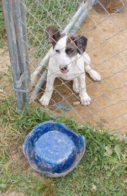 Waterer automatico per cani