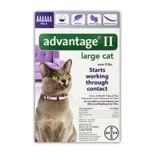 Vantaggio Bayer II trattamento di controllo delle pulci per la revisione dei gatti