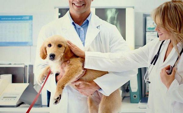 La migliore età per sterilizzare un cane