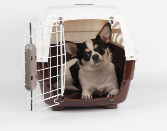 Le migliori casse per cani
