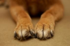 Chiodo cane rotto