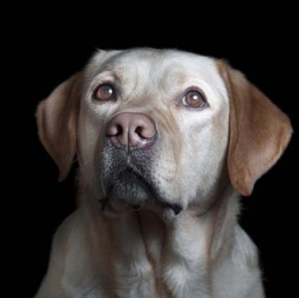 Leptospirosi canina