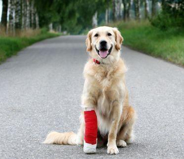 Cura per i cani feriti