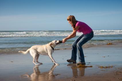 Scegliere un cane per adattarsi al tuo stile di vita