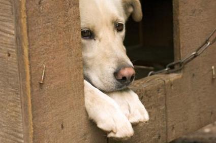 Scegliere una casa per cani