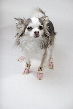 Scegliere gli stivali per il tuo cane