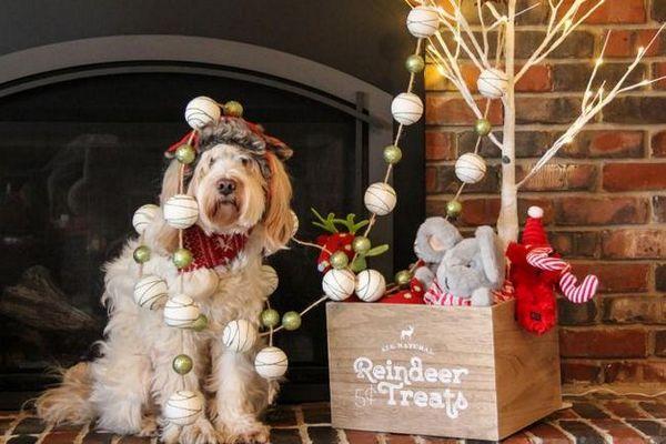 Natale e il tuo cane