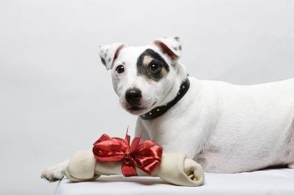 Idee regalo di Natale per cani e amanti dei cani