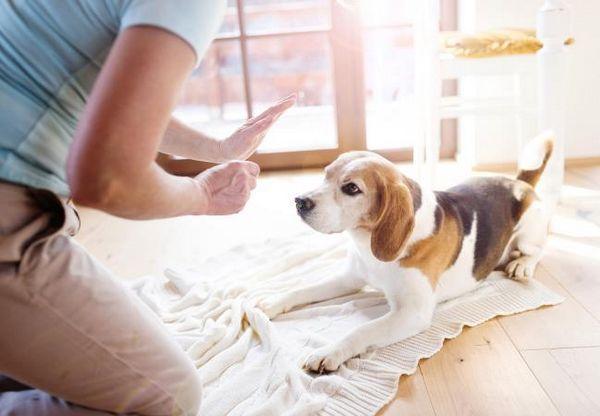 Sviluppa un piano per l`addestramento del cane