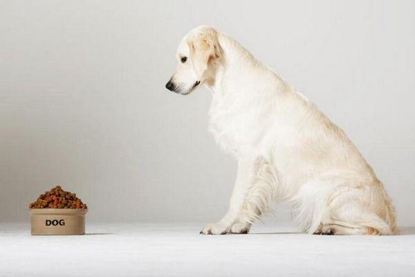 Cibo per cani diabetico