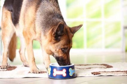 Dieta per cani con malattia del fegato canino