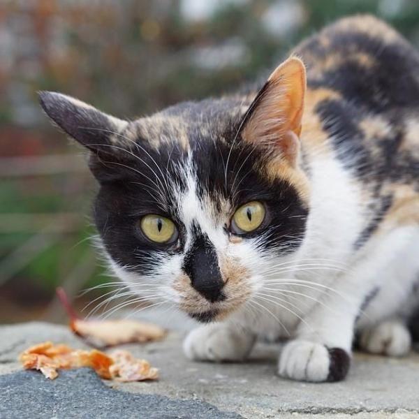 I gatti hanno davvero 9 vite?