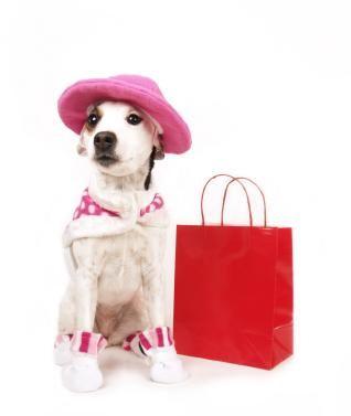 Collari e vestiti di lusso firmati da cani e cuccioli