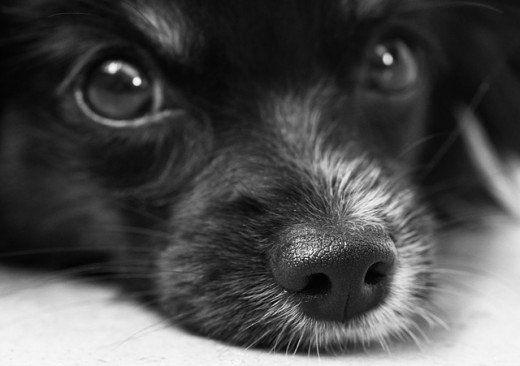 Astrologia cane