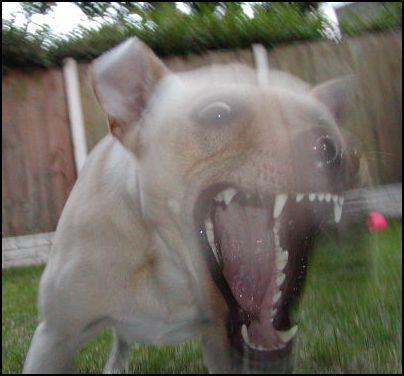 Chimica del cervello del cane e uso di farmaci e modificazione del comportamento