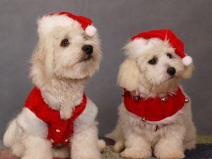 Cartoline di Natale della razza del cane