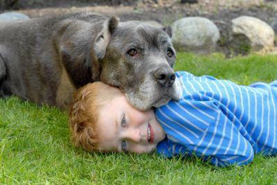 Cura del cane in tempi difficili
