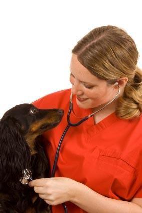 Diarrea cane cause e cure