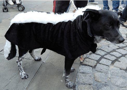 Salute del cane: comprensione dei problemi della ghiandola anale
