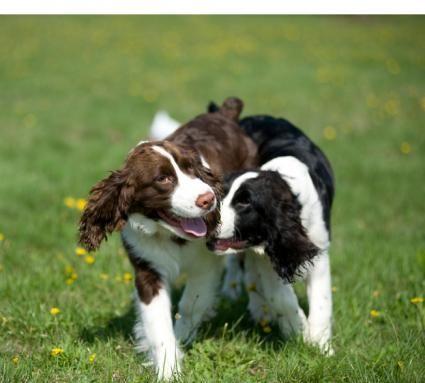 Ciclo termico e allevamento del cane