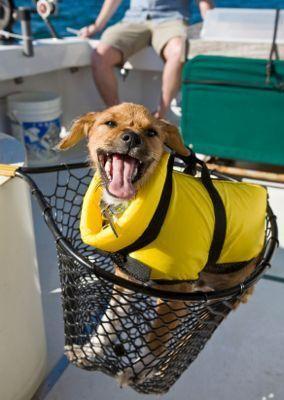 Giubbotti di salvataggio per cani