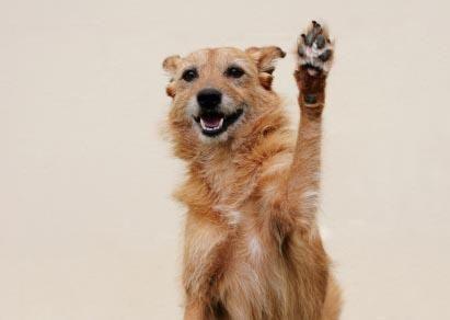 Salute della zampa del cane