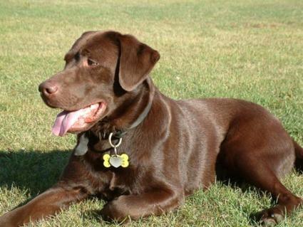 Medagliette per cani