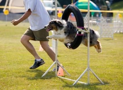 Libri di addestramento per cani