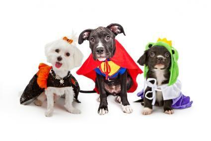 Consigli di sicurezza per cani esperti di Halloween