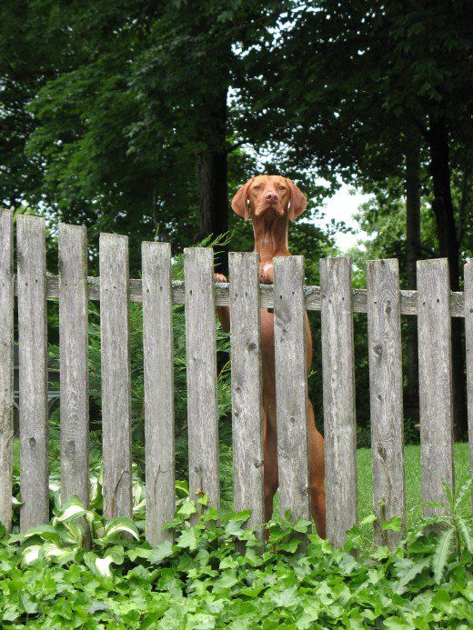 Idee di recinzione per proprietari di cani