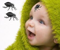Morsi delle pulci sui bambini - le pulci mordono il tuo bambino?