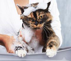 Prevenzione delle pulci: tenere lontane le pulci dai vostri animali domestici