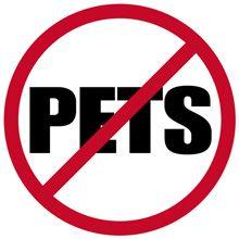 Pulci senza animali - Perché ho le pulci quando non ho animali domestici?