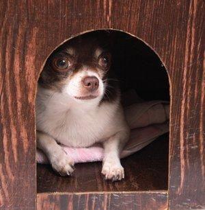 Piani di casa del cane gratuiti