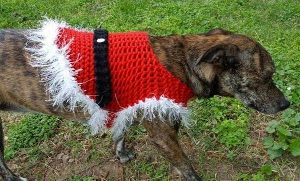 Modelli di maglioni di cani di Natale lavorati a maglia