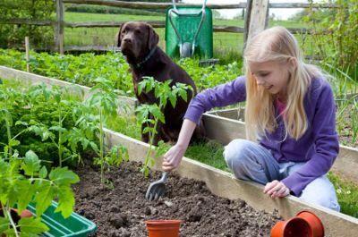 Giardinaggio con il tuo cane in mente