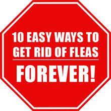 Liberarsi delle pulci - 10 modi semplici per sbarazzarsi delle pulci per sempre