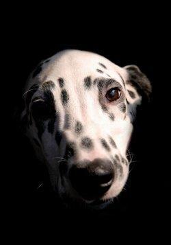 Rimedio omeopatico per l`insonnia e l`incontinenza del cane
