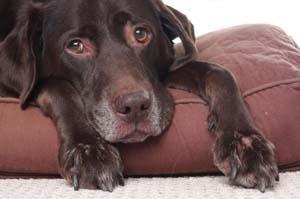 Quanto tempo vivono i cani