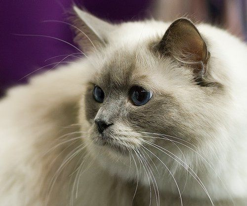 Come scegliere la giusta custodia per gatti all`aperto