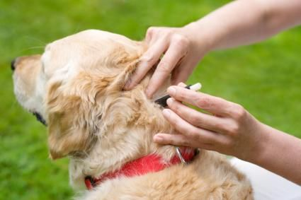 Come rimuovere un segno di spunta da un cane