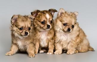 Come vendere i cuccioli