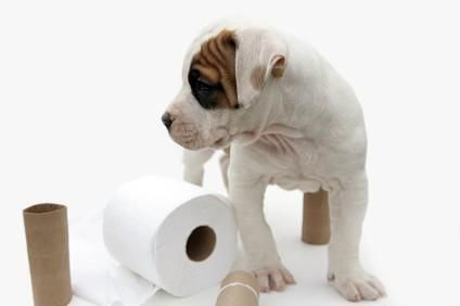 Come addestrare un nuovo cucciolo