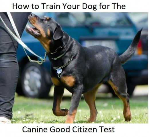 Come addestrare il tuo cane alla prova del buon cittadino canino